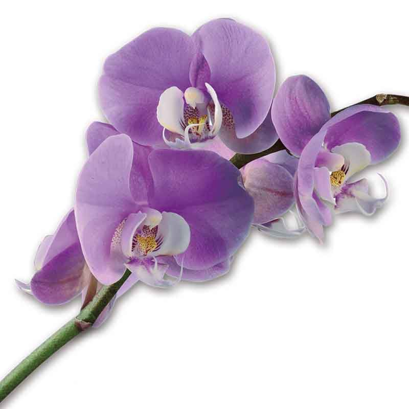 Miracle Orchids 4607 001 7 2