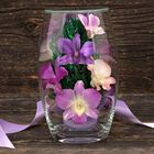 Miracle Orchids 4607 001 7 3